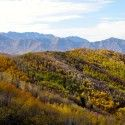 Gorgeous Utah fall colors [P] Holly Brooks