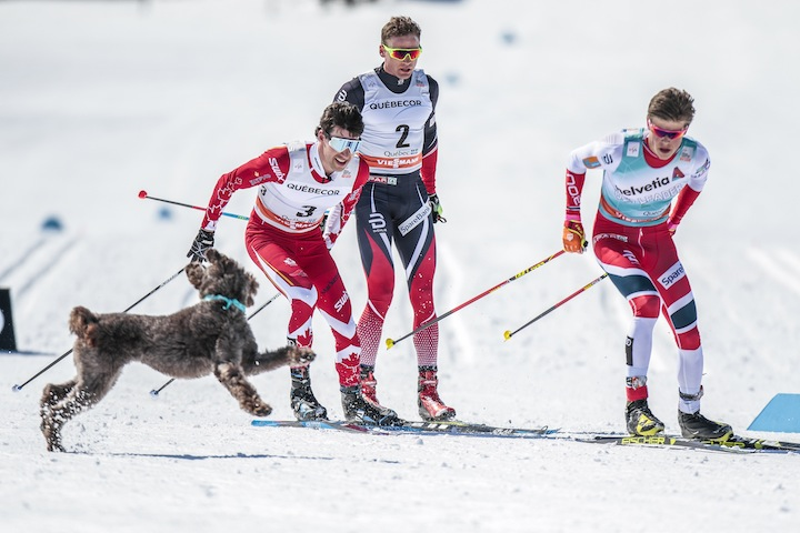 A dog decides to join the leaders [P] Nordic Focus